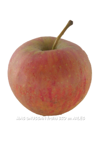 Daligris pomme bio demeter